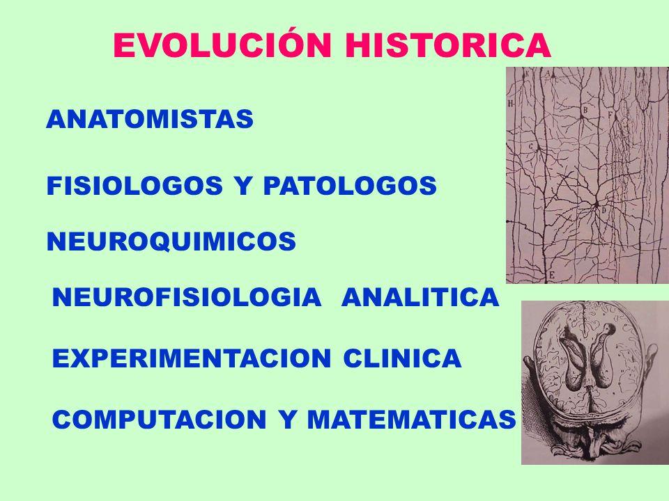 EVOLUCIÓN HISTORICA ANATOMISTAS FISIOLOGOS Y PATOLOGOS NEUROQUIMICOS