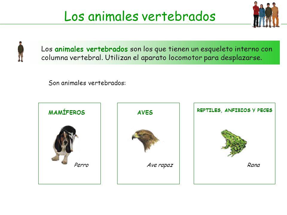 ANIMALES VERTEBRADOS. - ppt descargar