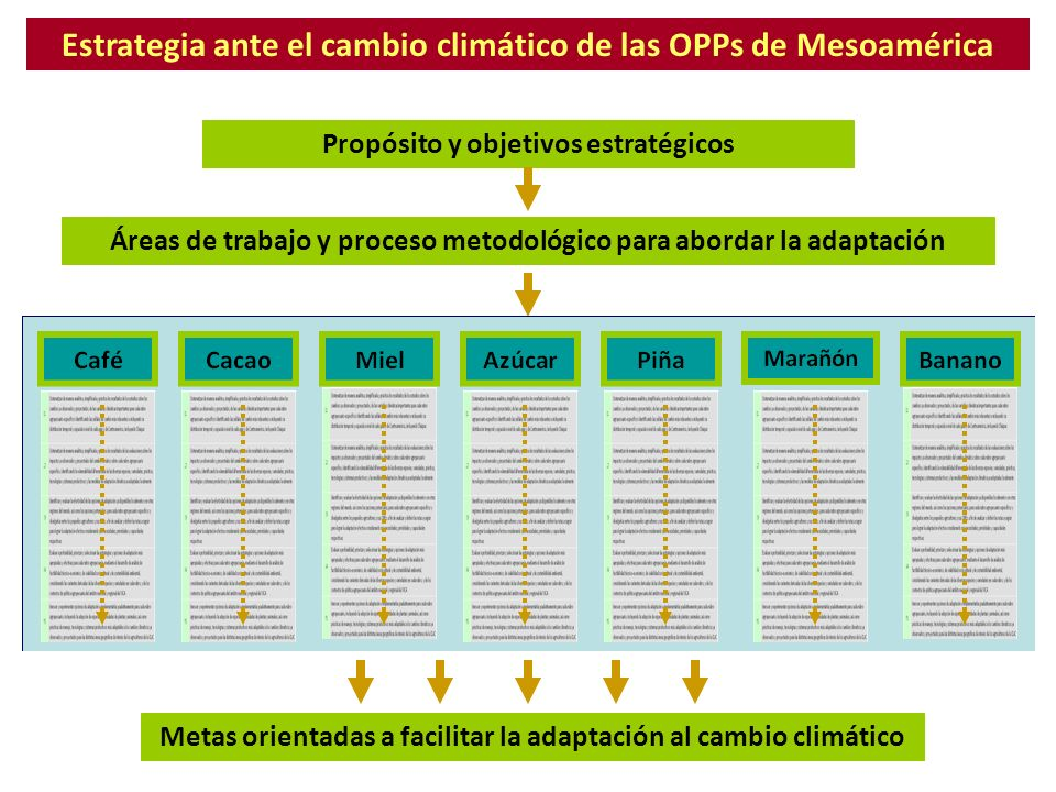 Estrategia ante el cambio climático de las OPPs de Mesoamérica