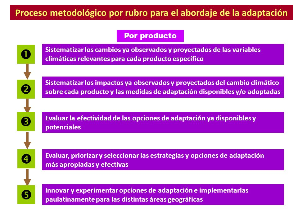 Proceso metodológico por rubro para el abordaje de la adaptación