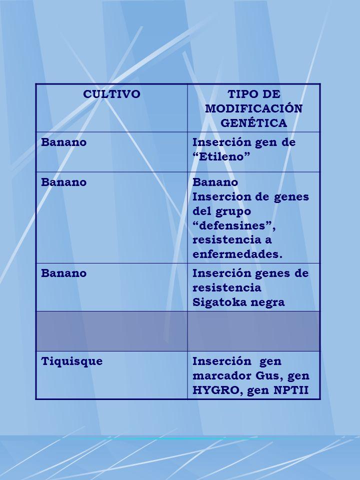 TIPO DE MODIFICACIÓN GENÉTICA