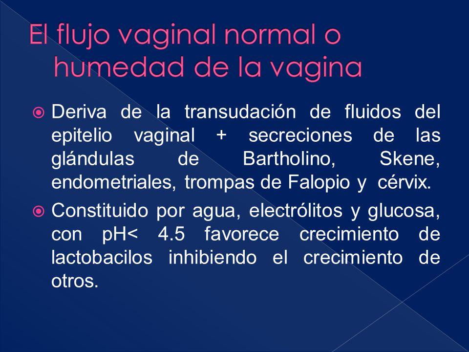 El flujo vaginal normal o humedad de la vagina
