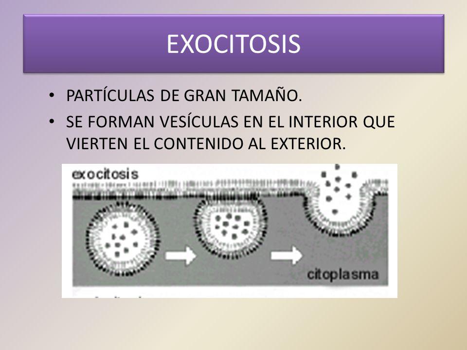EXOCITOSIS PARTÍCULAS DE GRAN TAMAÑO.