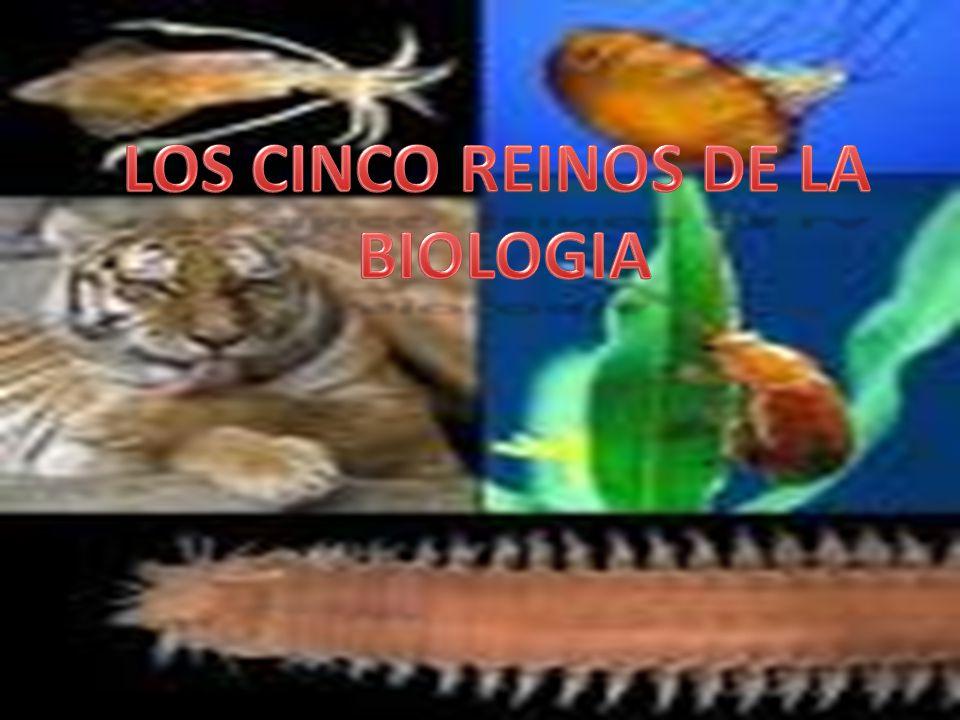 LOS CINCO REINOS DE LA BIOLOGIA