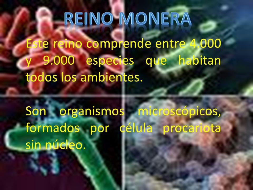 REINO MONERA Este reino comprende entre 4.000 y 9.000 especies que habitan todos los ambientes.