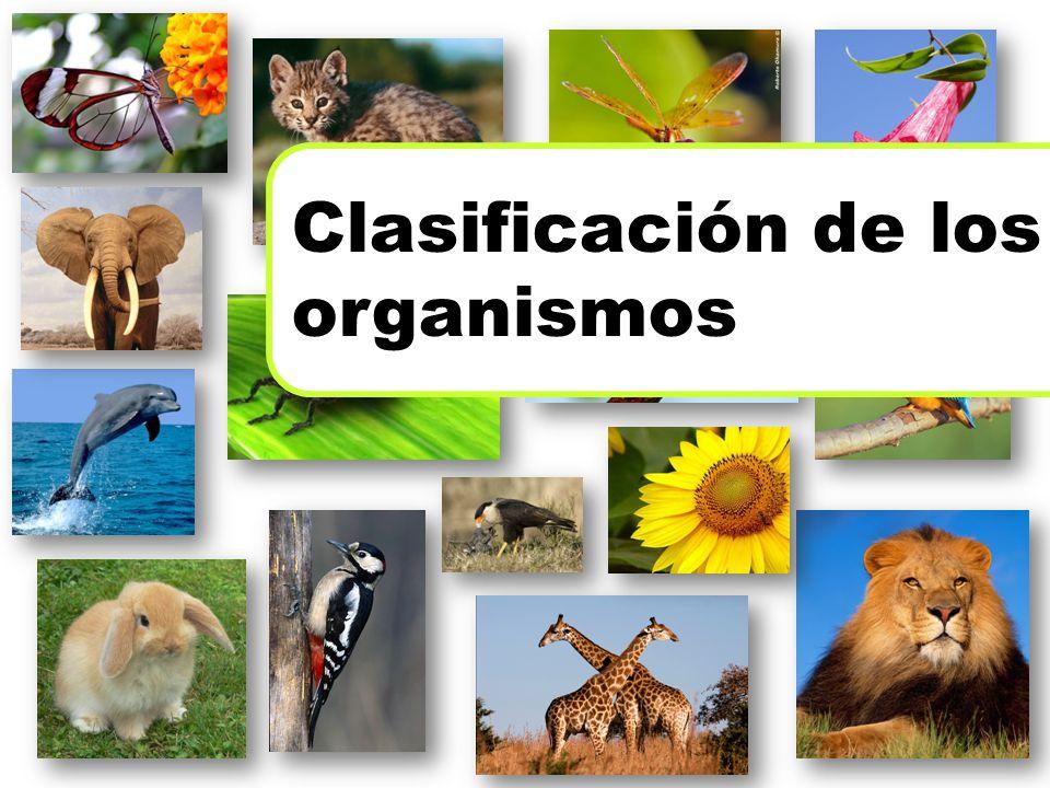 Clasificación de los organismos