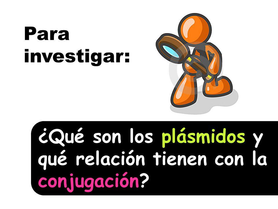 Para investigar: ¿Qué son los plásmidos y qué relación tienen con la conjugación