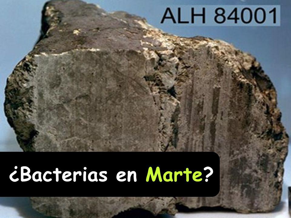 ¿Bacterias en Marte