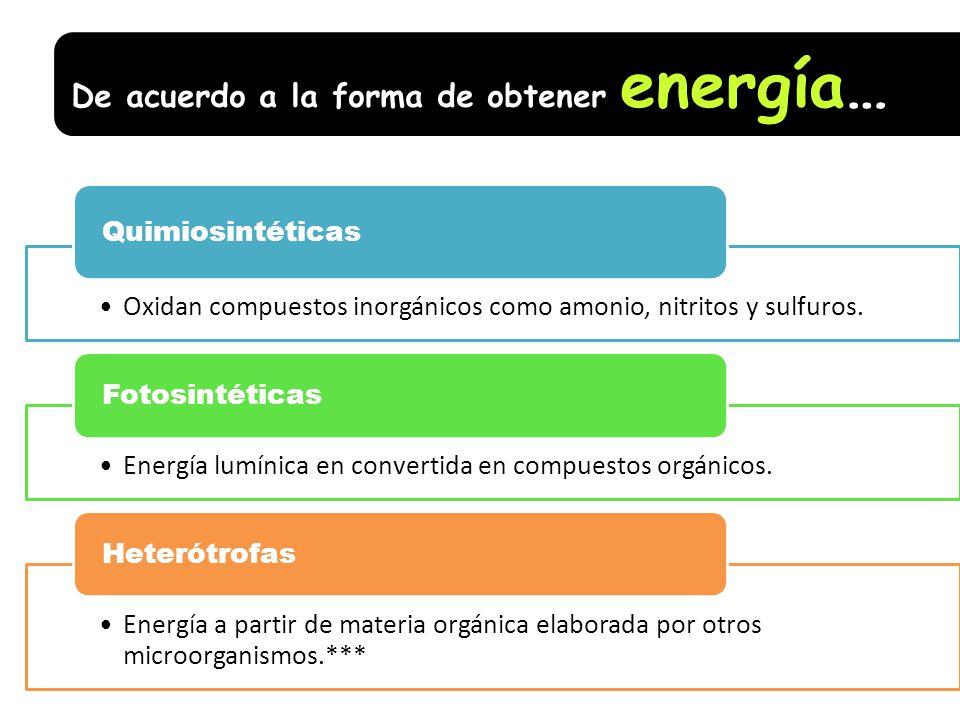 De acuerdo a la forma de obtener energía…