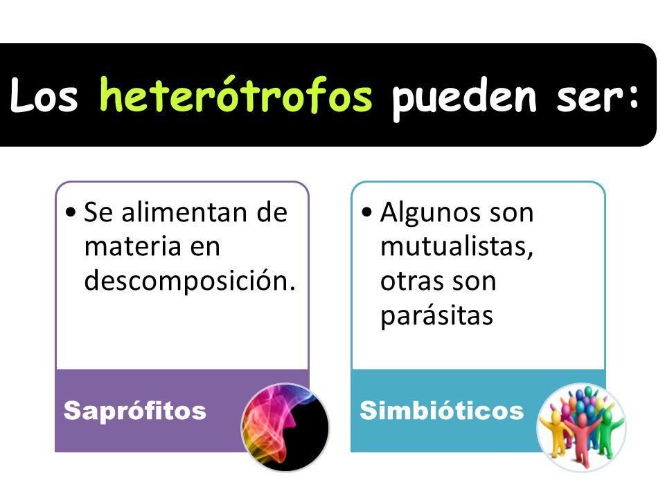 Los heterótrofos pueden ser: