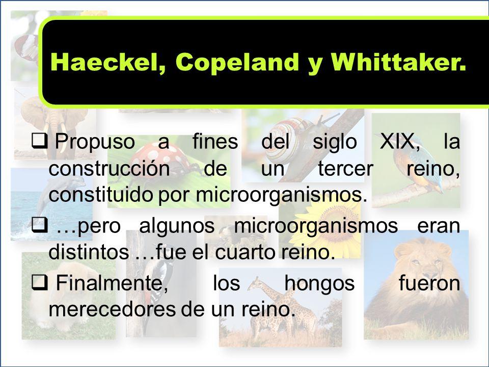 Haeckel, Copeland y Whittaker.