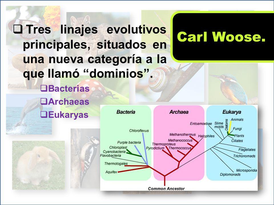 Carl Woose. Tres linajes evolutivos principales, situados en una nueva categoría a la que llamó dominios .