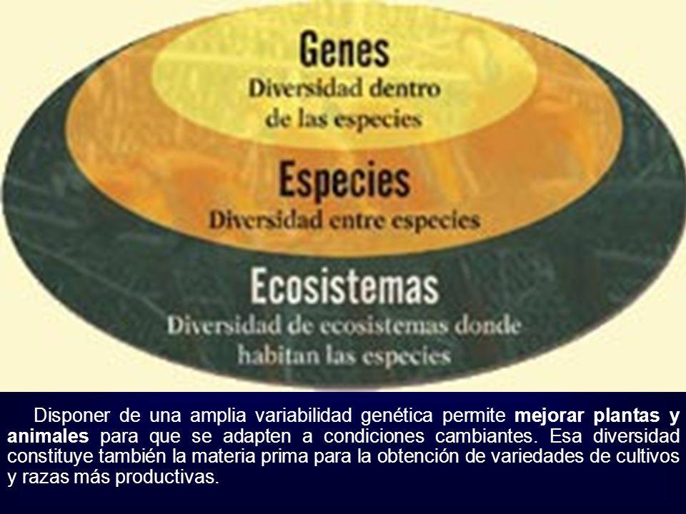 Disponer de una amplia variabilidad genética permite mejorar plantas y animales para que se adapten a condiciones cambiantes.