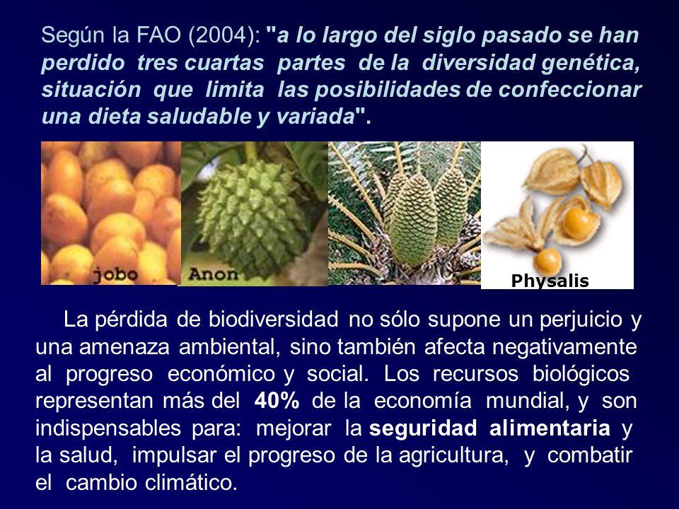 Según la FAO (2004): a lo largo del siglo pasado se han perdido tres cuartas partes de la diversidad genética, situación que limita las posibilidades de confeccionar una dieta saludable y variada .
