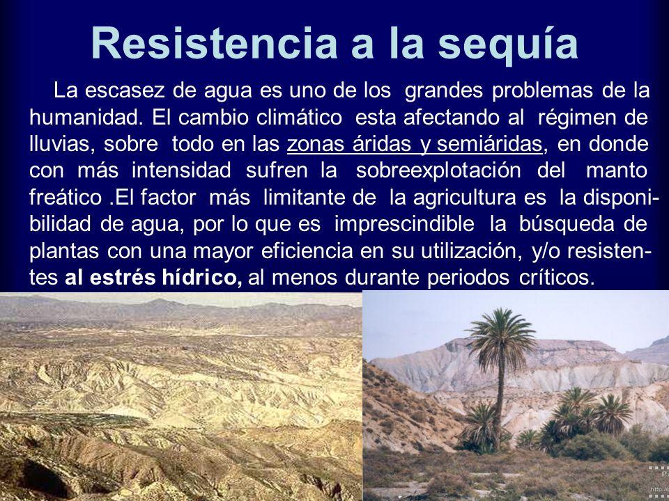 Resistencia a la sequía