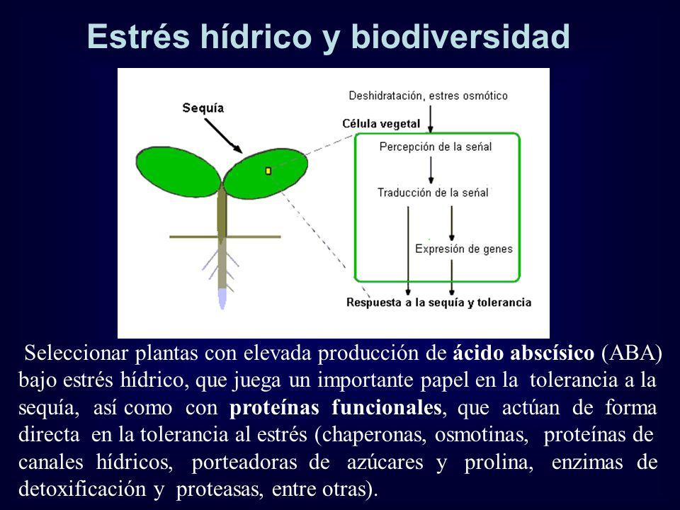 Estrés hídrico y biodiversidad