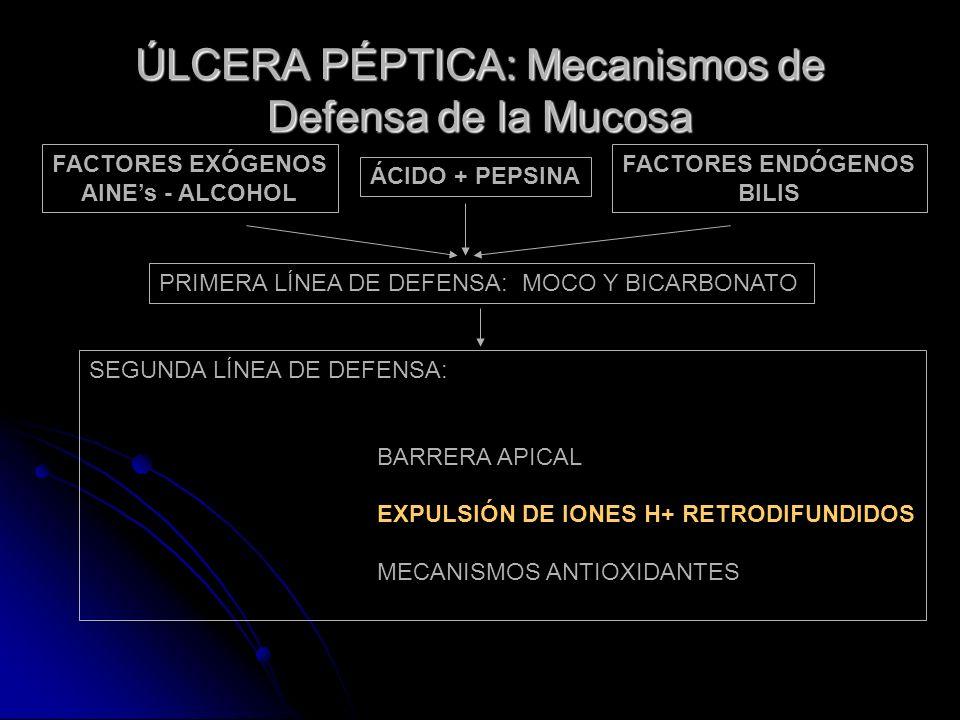ÚLCERA PÉPTICA: Mecanismos de Defensa de la Mucosa