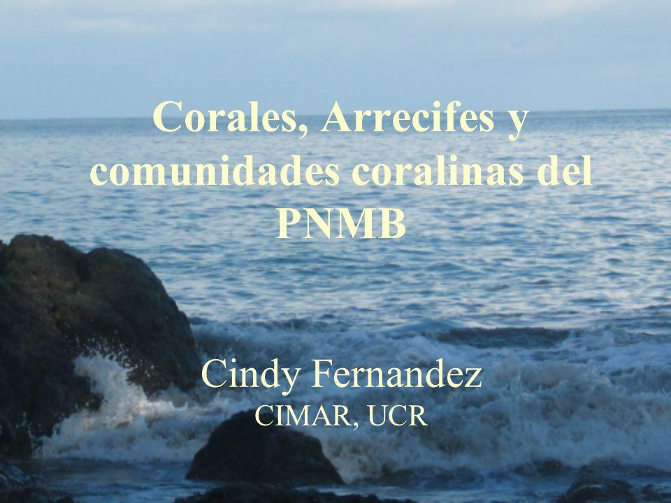 Corales, Arrecifes y comunidades coralinas del PNMB Cindy Fernandez CIMAR, UCR