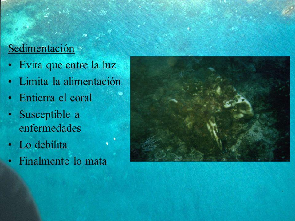 Sedimentación Evita que entre la luz. Limita la alimentación. Entierra el coral. Susceptible a enfermedades.