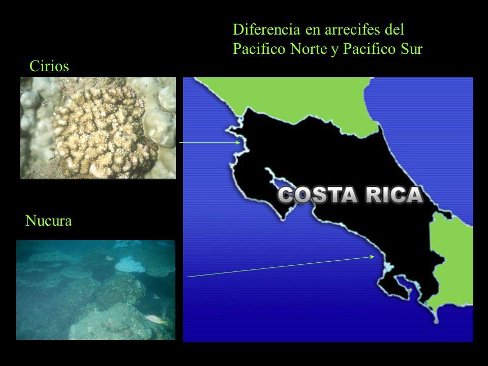Diferencia en arrecifes del Pacifico Norte y Pacifico Sur