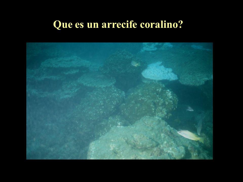Que es un arrecife coralino