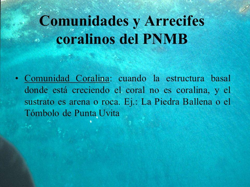 Comunidades y Arrecifes coralinos del PNMB