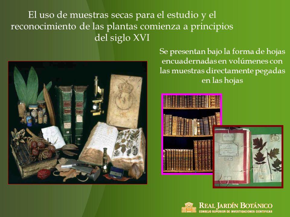 El uso de muestras secas para el estudio y el reconocimiento de las plantas comienza a principios del siglo XVI