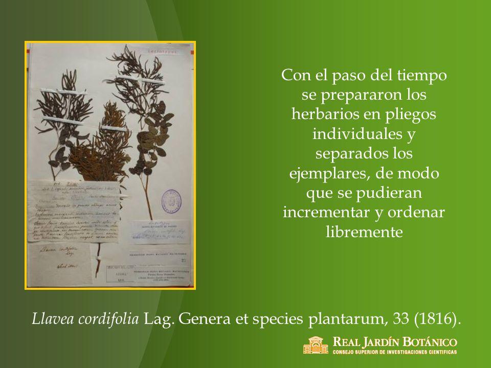 Con el paso del tiempo se prepararon los herbarios en pliegos individuales y separados los ejemplares, de modo que se pudieran incrementar y ordenar libremente