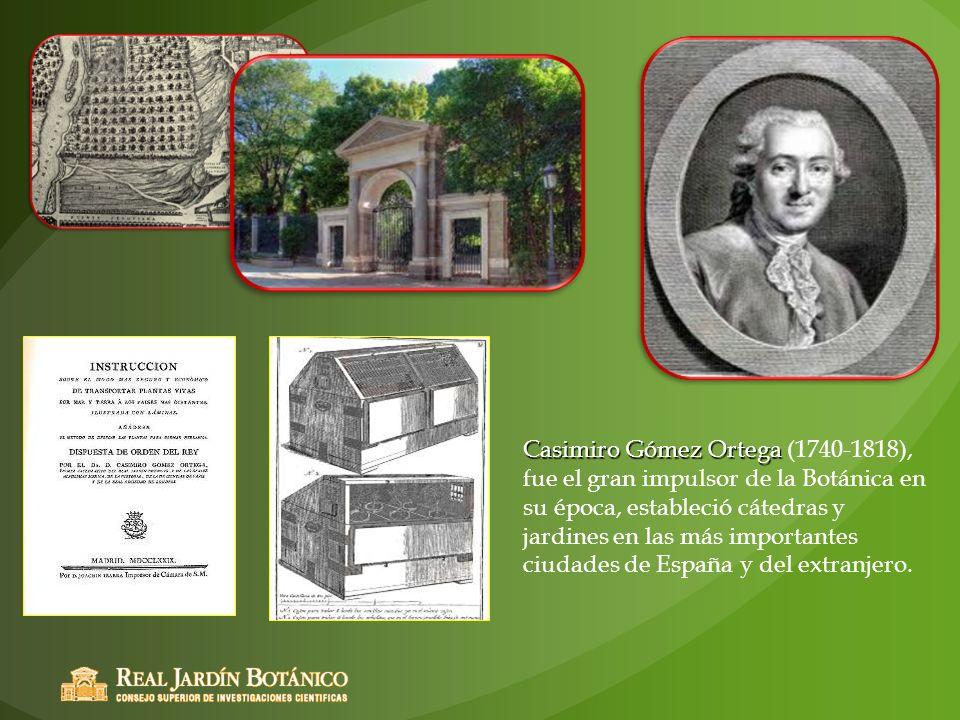 Casimiro Gómez Ortega (1740-1818), fue el gran impulsor de la Botánica en su época, estableció cátedras y jardines en las más importantes ciudades de España y del extranjero.