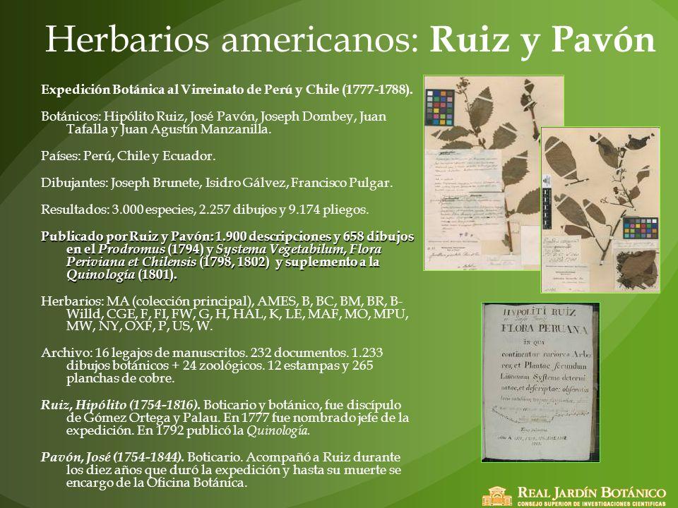 Herbarios americanos: Ruiz y Pavón