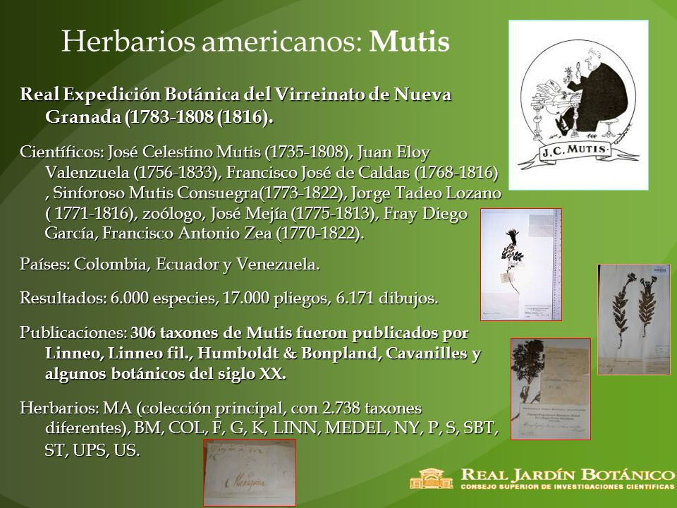 Herbarios americanos: Mutis