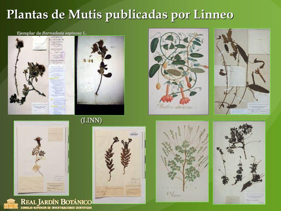 Plantas de Mutis publicadas por Linneo