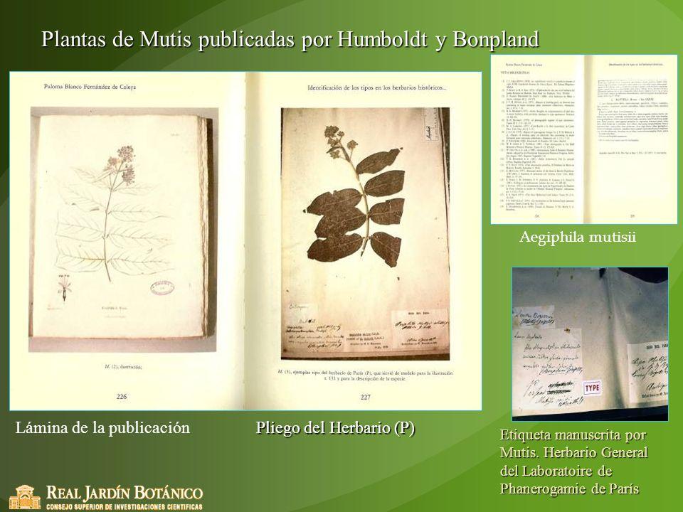 Plantas de Mutis publicadas por Humboldt y Bonpland