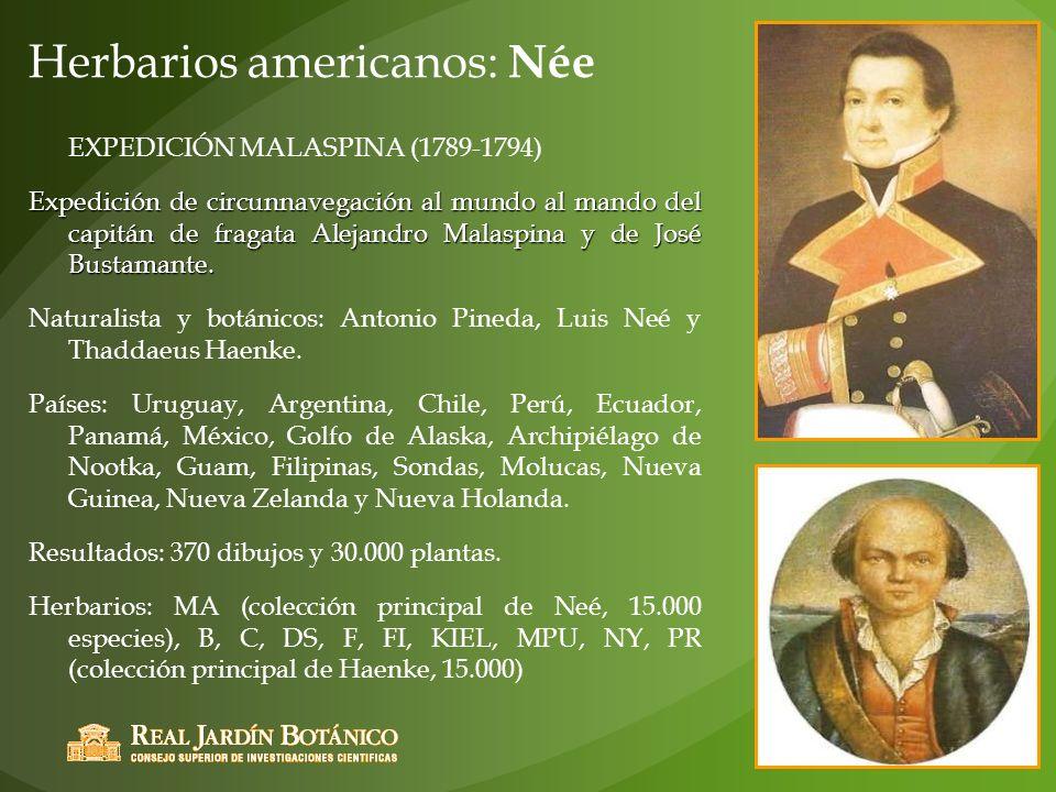 Herbarios americanos: Née
