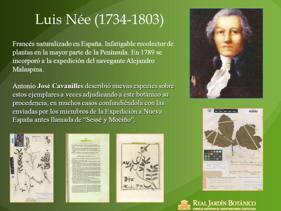 Luis Née (1734-1803)