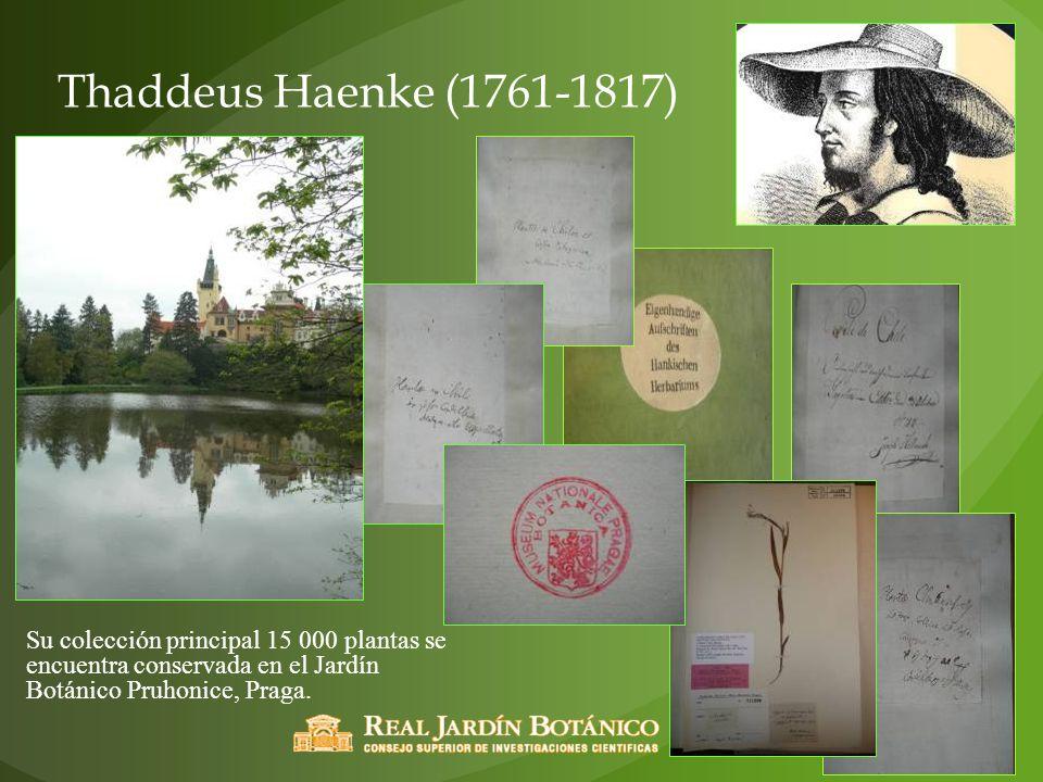 Thaddeus Haenke (1761-1817) Su colección principal 15 000 plantas se encuentra conservada en el Jardín Botánico Pruhonice, Praga.