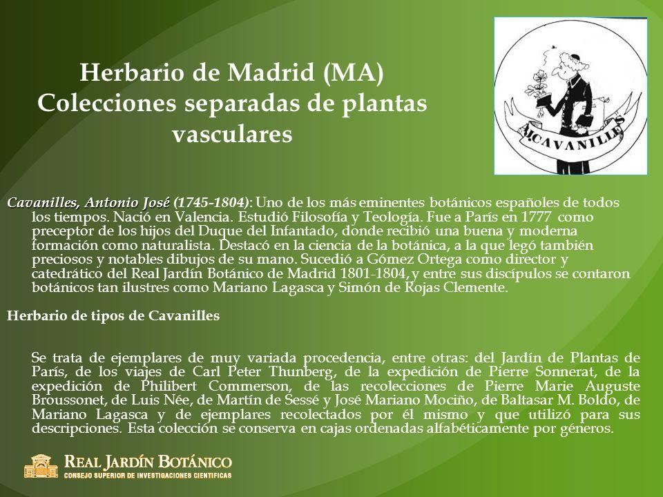 Herbario de Madrid (MA) Colecciones separadas de plantas vasculares