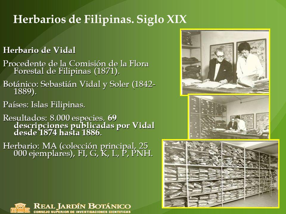 Herbarios de Filipinas. Siglo XIX