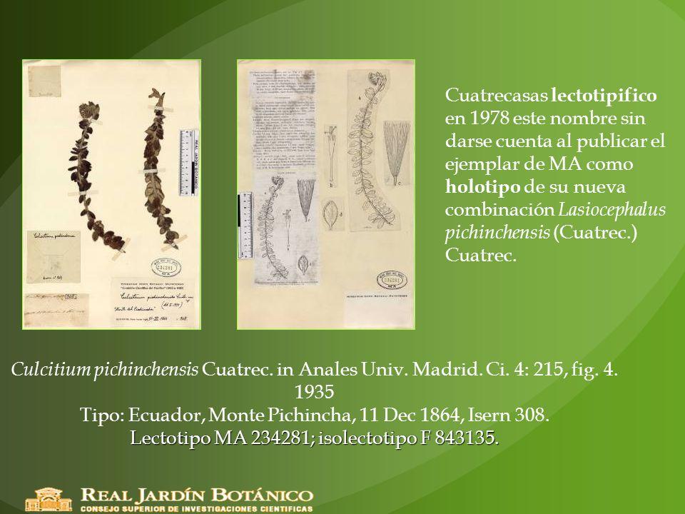 Cuatrecasas lectotipifico en 1978 este nombre sin darse cuenta al publicar el ejemplar de MA como holotipo de su nueva combinación Lasiocephalus pichinchensis (Cuatrec.) Cuatrec.