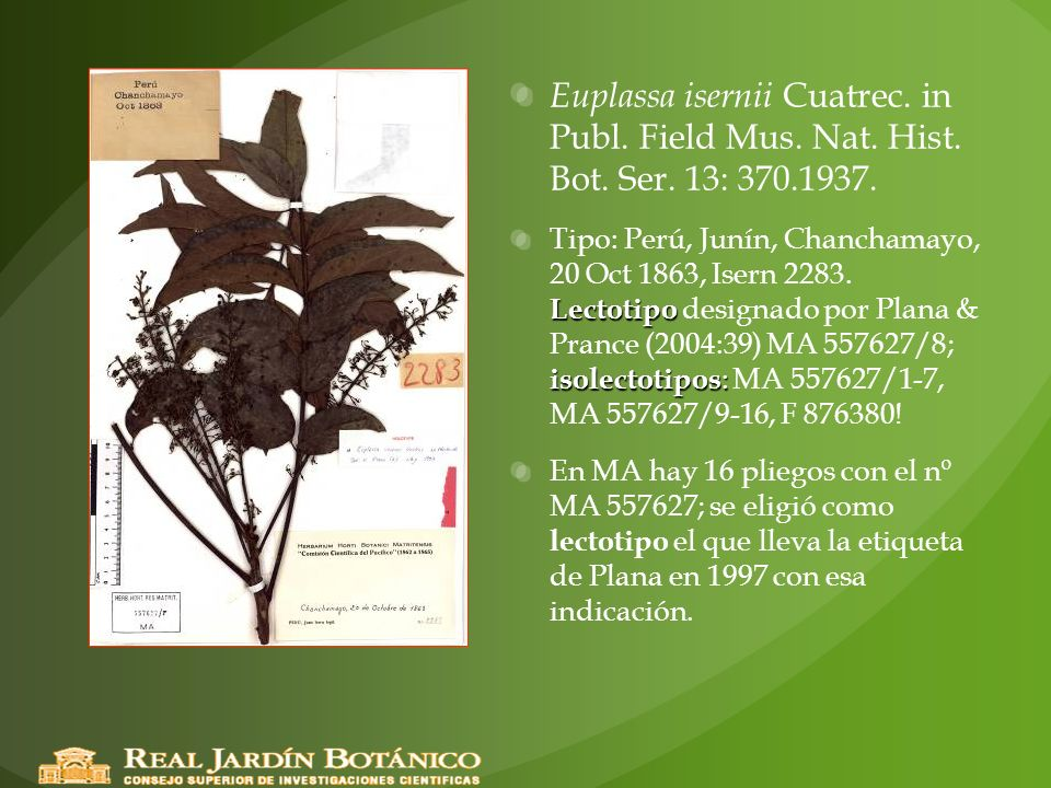 Euplassa isernii Cuatrec. in Publ. Field Mus. Nat. Hist. Bot. Ser