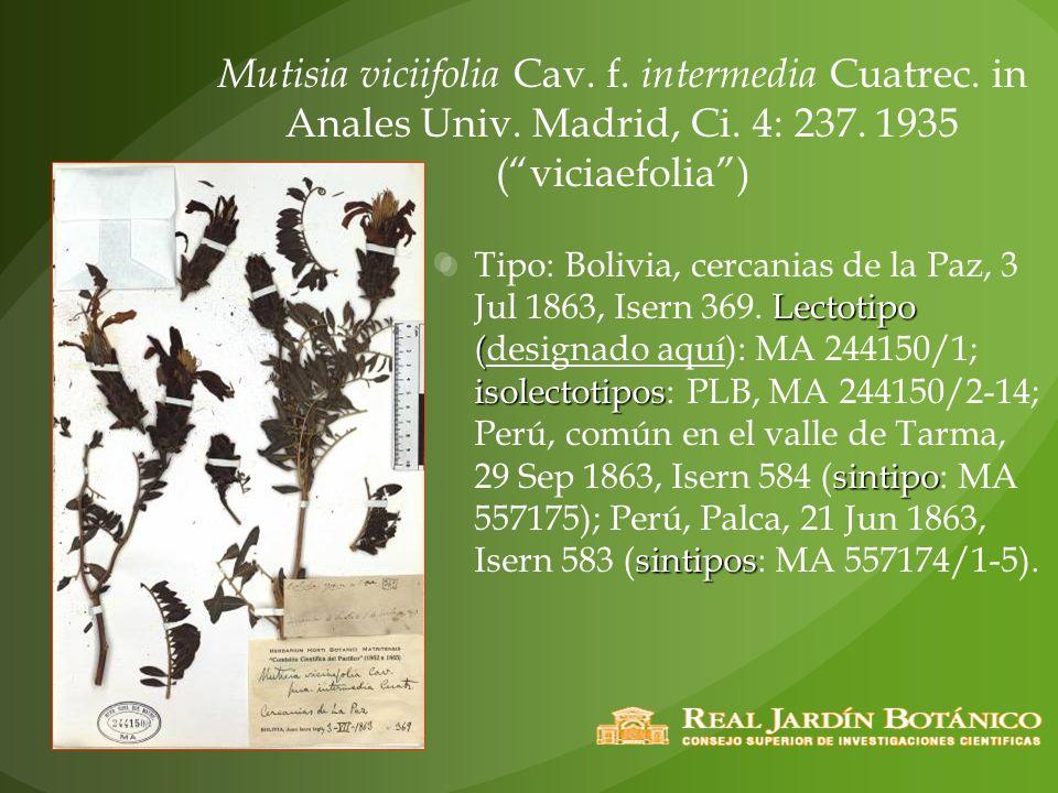 Mutisia viciifolia Cav. f. intermedia Cuatrec. in Anales Univ