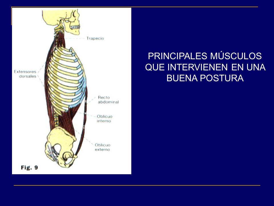 Columna y postura actividad f sica y salud colegio cristo for Sillas para una buena postura