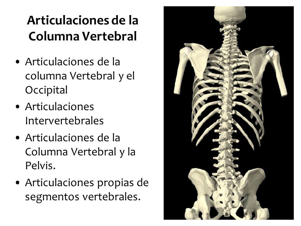 Articulaciones de la Columna Vertebral - ppt video online descargar