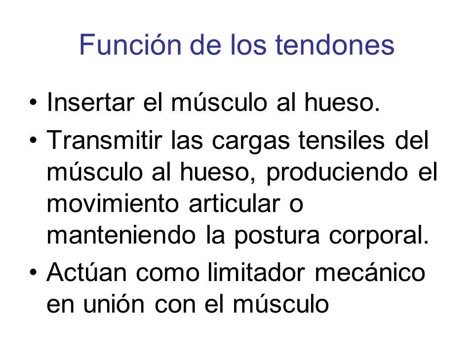 TENDONES Y LIGAMENTOS. - ppt video online descargar