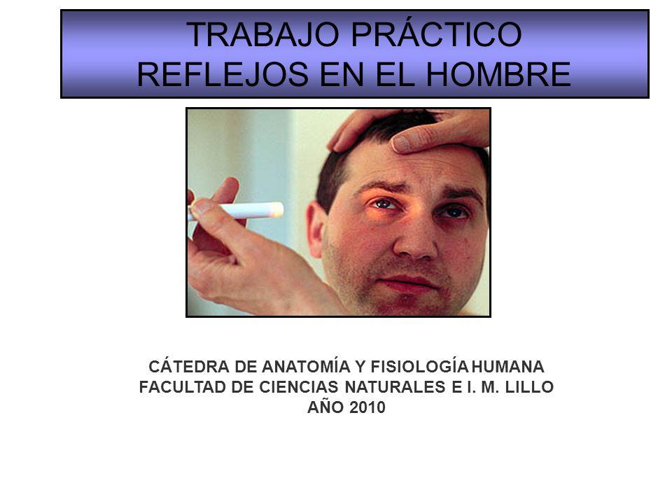 TRABAJO PRÁCTICO REFLEJOS EN EL HOMBRE - ppt video online descargar
