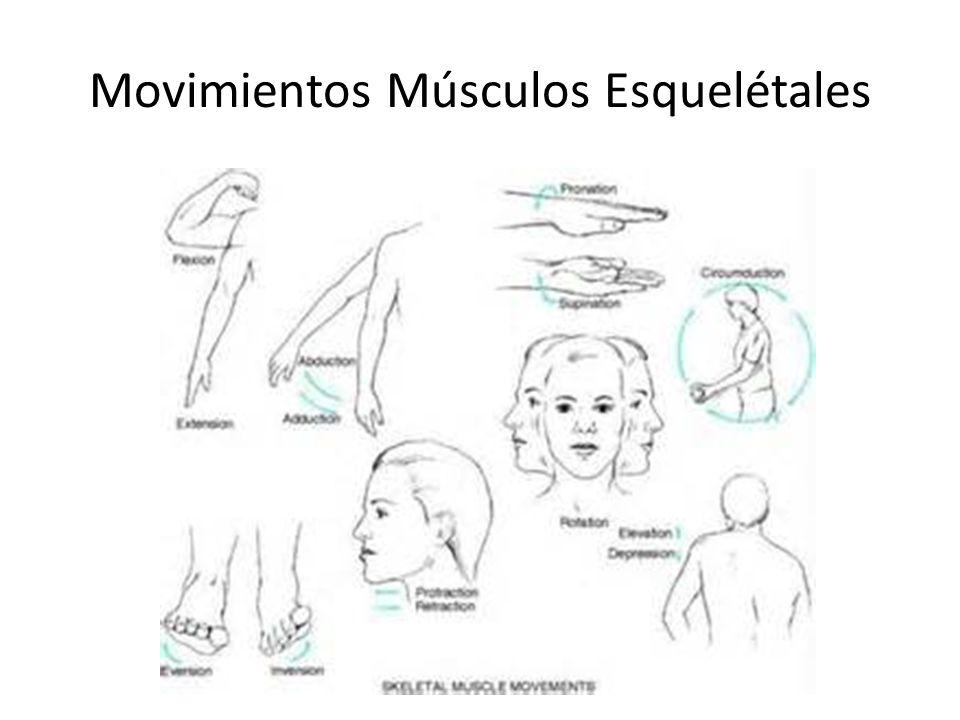 Movimientos Músculos Esquelétales
