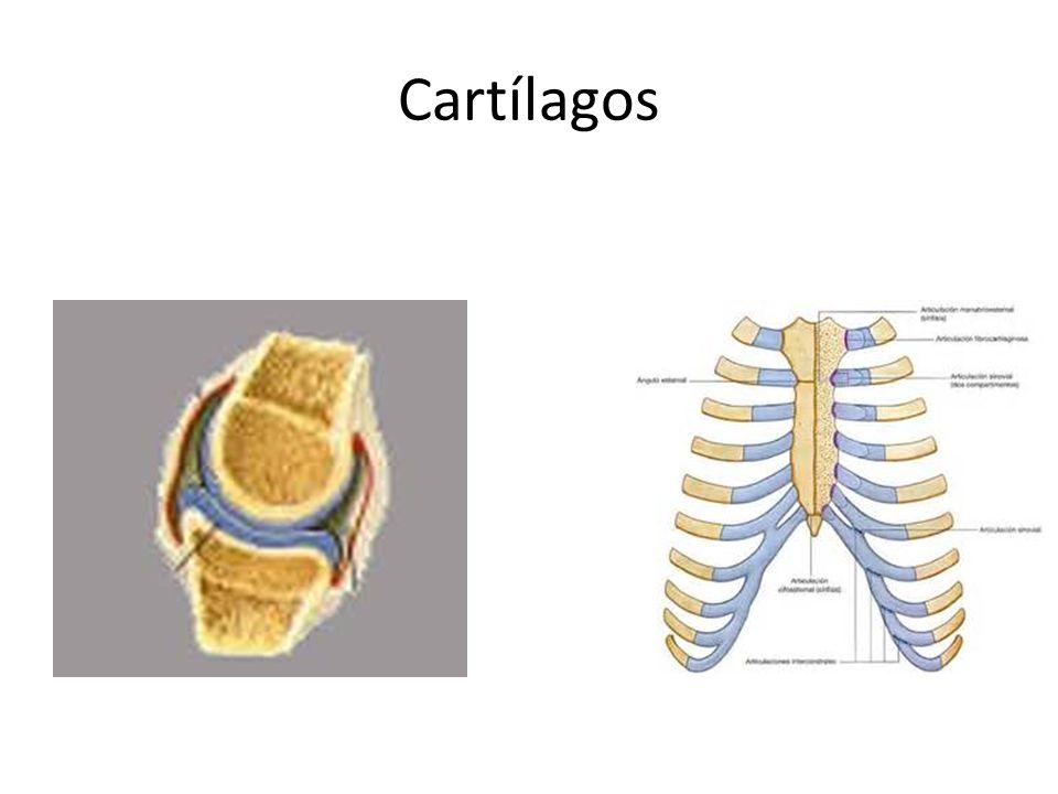 Cartílagos