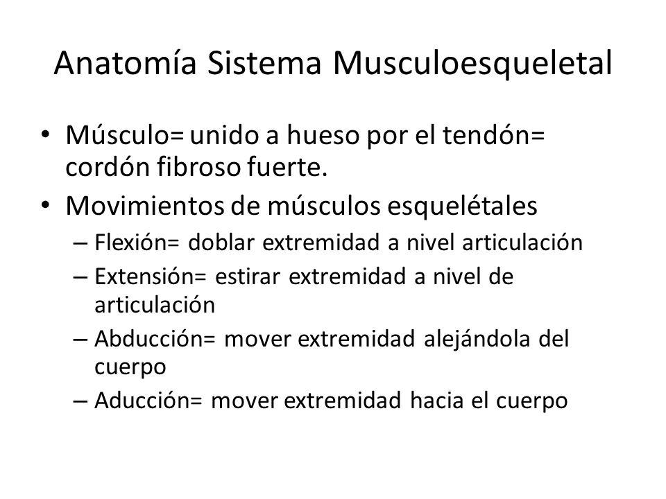 Anatomía Sistema Musculoesqueletal