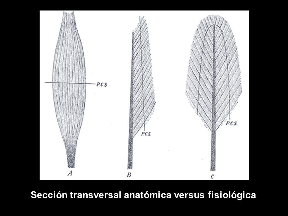 Lujo Definir La Anatomía Y Fisiología Festooning - Imágenes de ...
