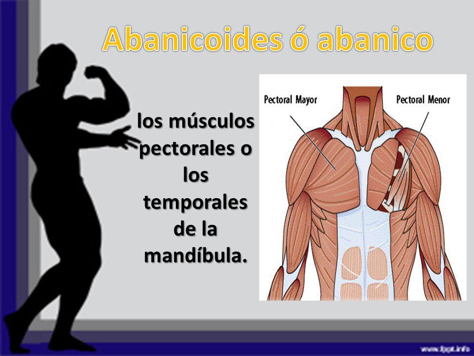 Asombroso Anatomía Músculo Pectoral Festooning - Anatomía de Las ...